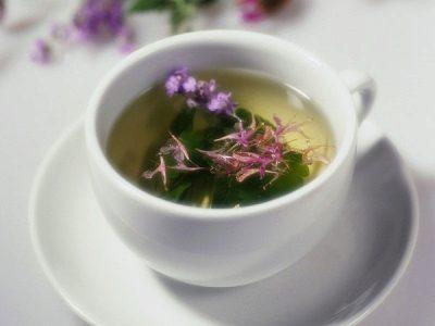иван чай полезные свойства и противопоказания при язве желудка