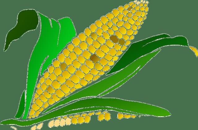 какие витамины в кукурузе и чем они полезны