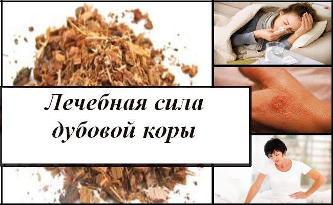кора дуба полезные свойства и противопоказания для женщин