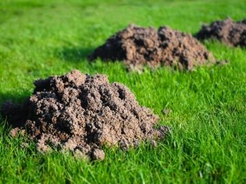 кроты в огороде вред или польза