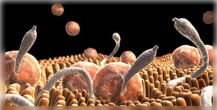 осиновая кора полезные свойства и применение от паразитов