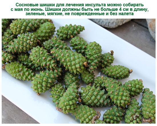 полезные свойства сосновых шишек на водке от инсульта