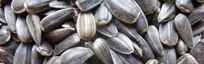 семечки польза и вред для здоровья