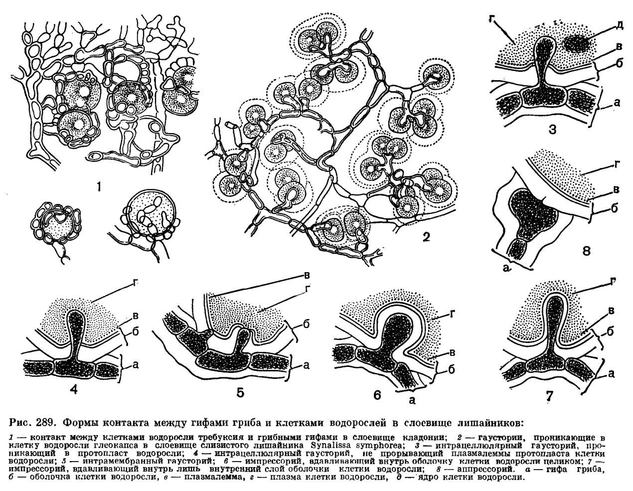 в чем проявляются полезные взаимосвязи гриба и водоросли