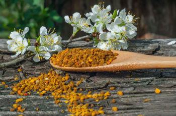 что такое пыльца и чем она полезна