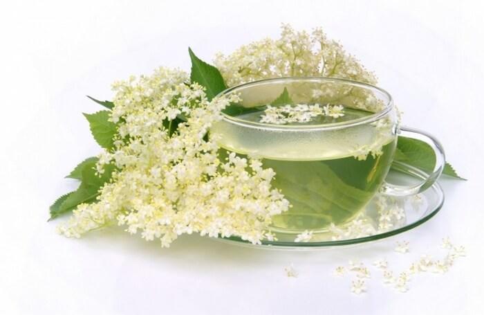 как заварить цветы бузины и чем они полезны