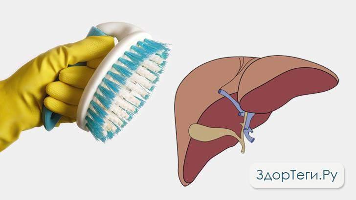 чистка печени вред и польза и вред